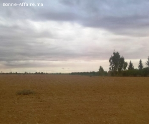 Terrain titré 8 ha à Mzouda